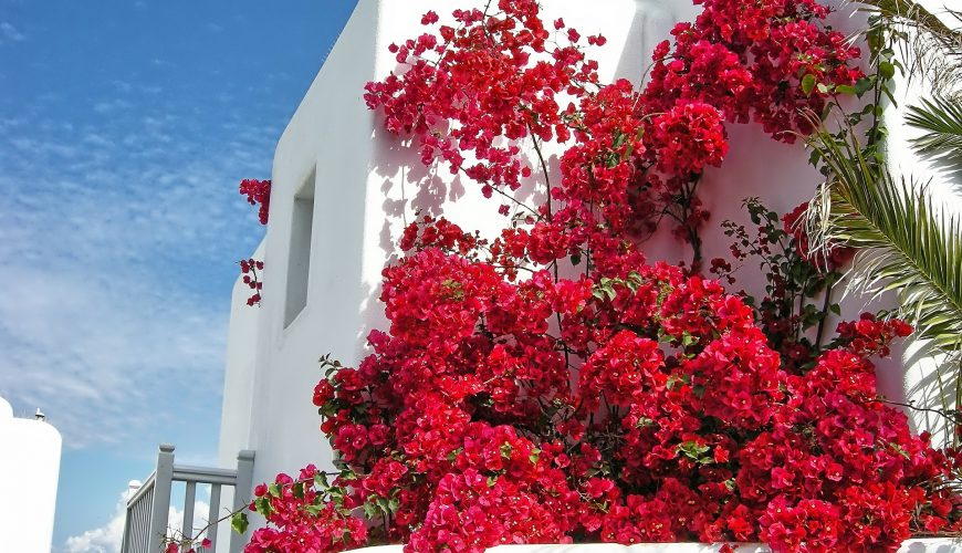 best cheap hotels in mykonos