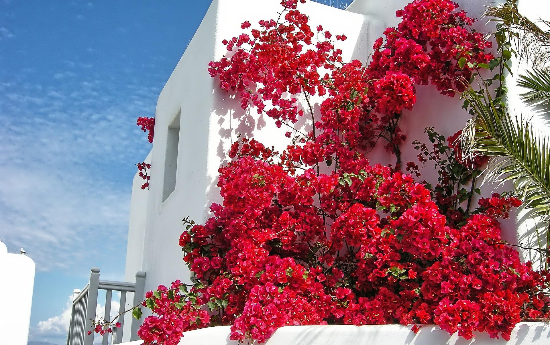 best cheap hotels in mykonos